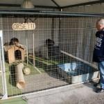 Le leggi non sono uguali per gli animali dei circhi e degli zoo