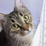Nuovo regolamento per gli animali: pregi e difetti