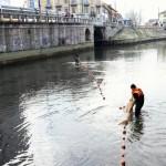 Darsena a secco per lavori, fauna in pericolo: l'inutilità delle asciutte