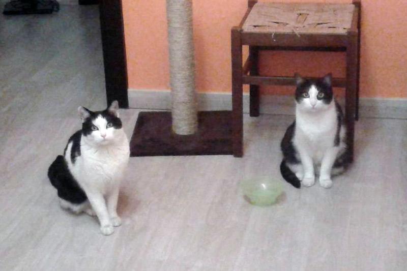 Caio e Pollo, nella nuova casa