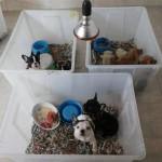 Ancora traffico cuccioli nel milanese, servono punizioni più severe