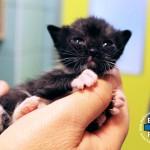 Gattina in fin di vita salvata da ENPA Milano