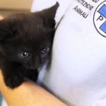 Operatori ENPA Milano e pompieri dopo 4 ore di lavoro salvano gattino in un motore