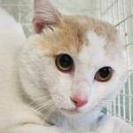 Un gatto ha un colpo di calore, lo soccorre ENPA Milano