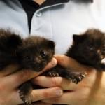 Tre gattini lanciati da un'auto in corsa