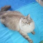 ENPA Milano trova gatto senza vita in una casa sequestrata da 2 mesi
