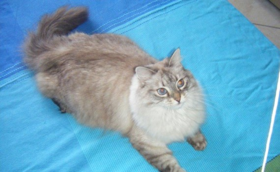 foto-gatto-ridotta