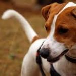 Milano: veterinario investe cane e non lo soccorre. ENPA chiede procedimento disciplinare a Ordine