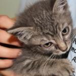 Salvato gatto alle 3 del mattino da motore di auto in corso Lodi