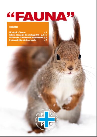 scoiattolo, fauna 2016 dicembre