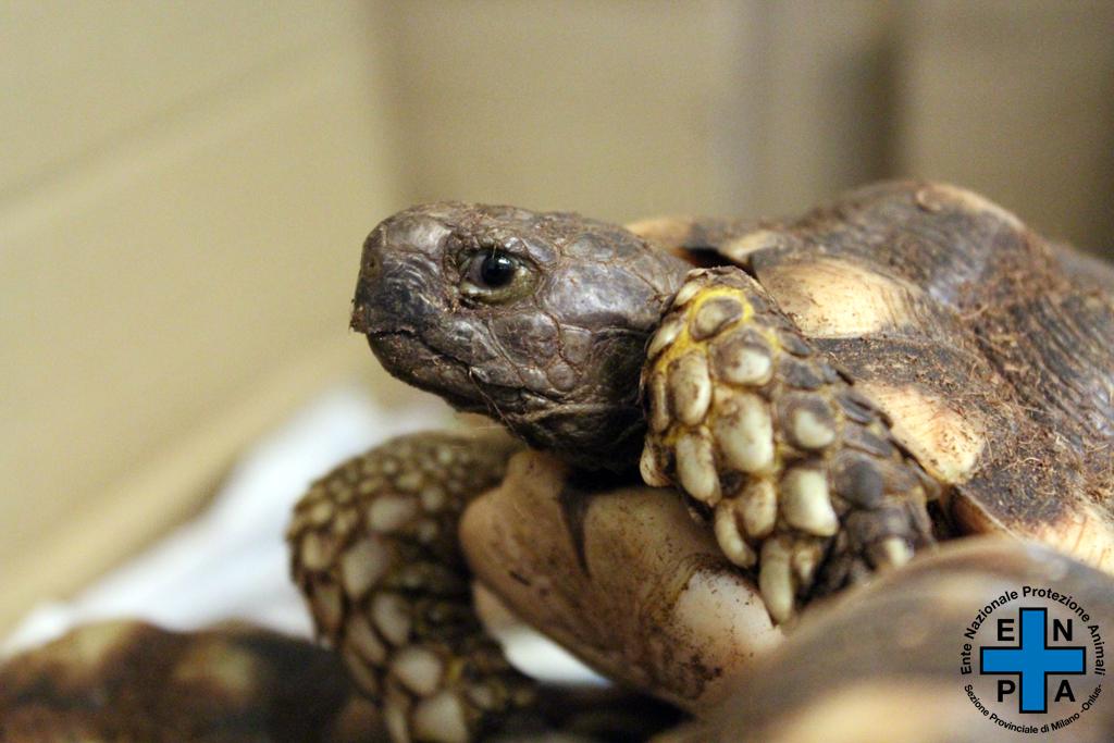 6-tartarughe-abbandonate-pavia
