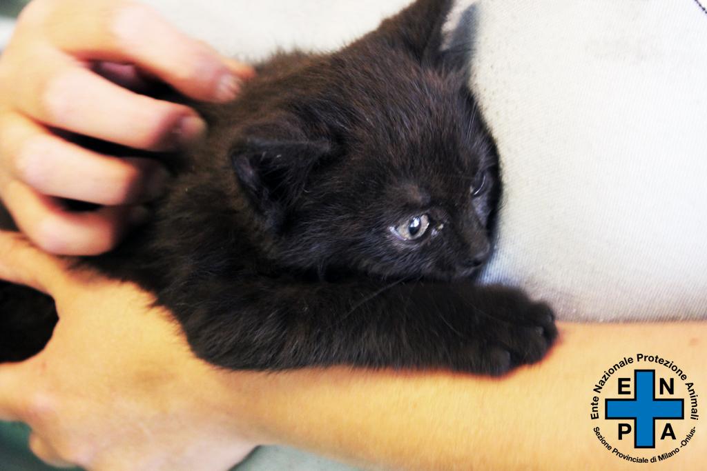 gattino-4-ore-con-vvff