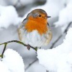 I piccoli uccelli e il freddo