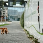 ENPA contrariata dalla nomina fatta dal sindaco Sala di due Garanti dei Diritti degli Animali a Milano
