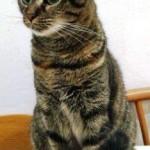 Via Astico, salvata dopo 10 giorni la gatta Octavia: era presente nella casa al momento del crollo ma non si trovava più!