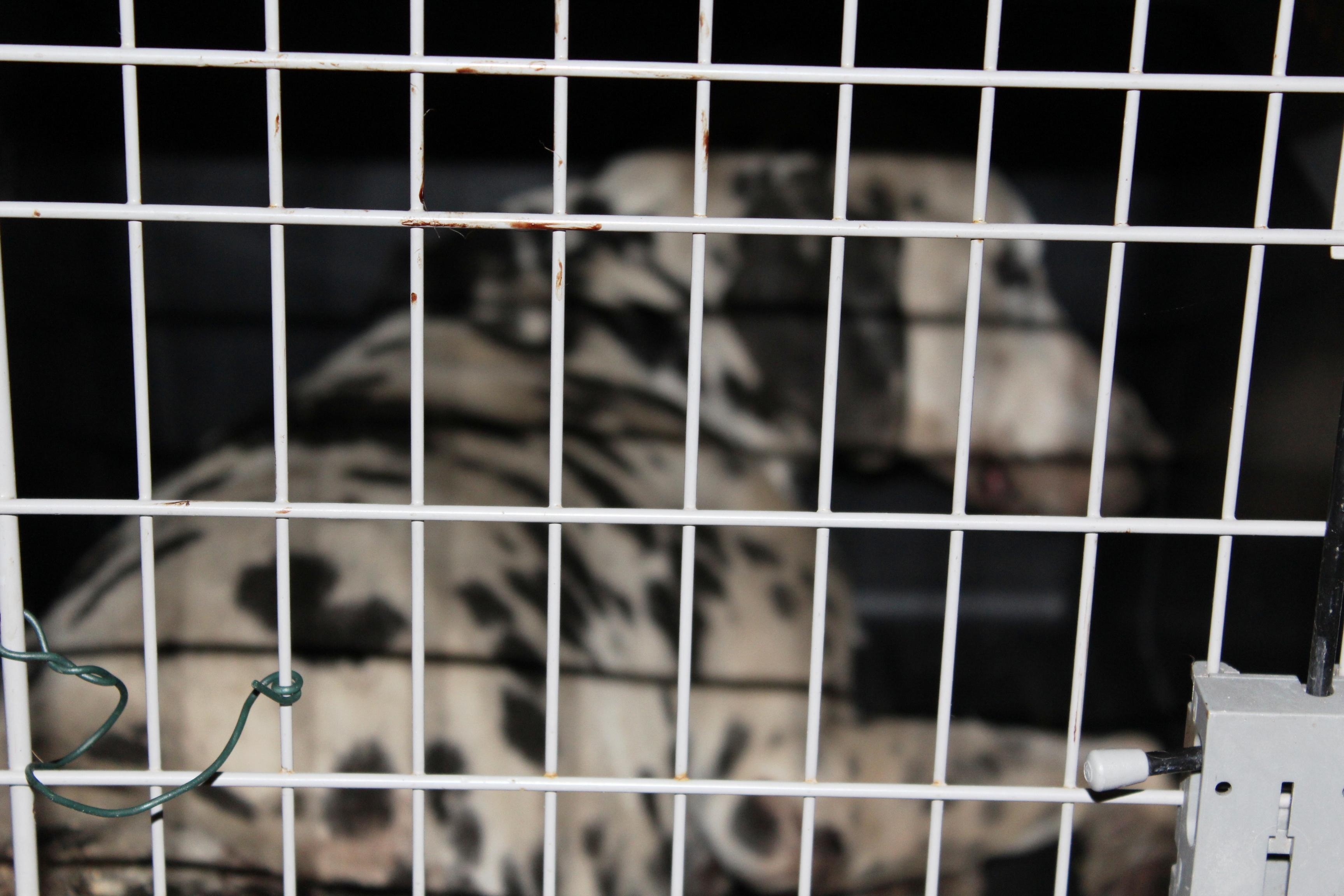 cane sfocato nel kennel