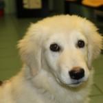 ENPA Milano scrive a forze di polizia: non serve la presenza di un veterinario per interrompere un reato su animali