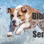 """Conferenza 26/05/17 h 18:00 – """"Pronto soccorso cani e gatti, in previsione dell'arrivo del caldo"""" – Biblioteca Parco Sempione"""