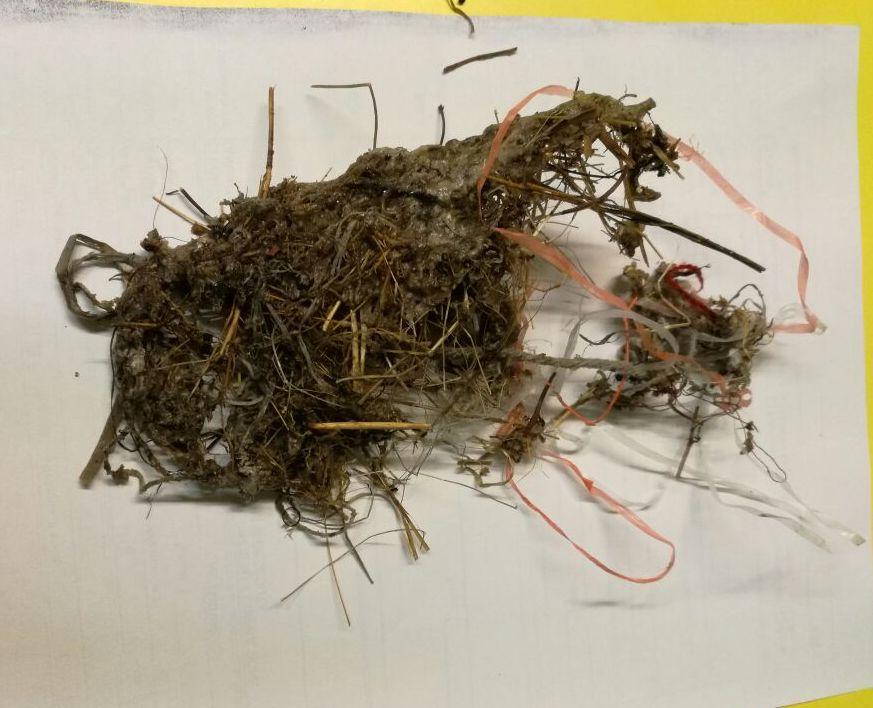 dettaglio nido con filo