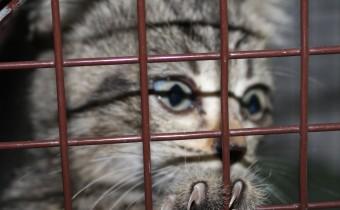 gattino 10