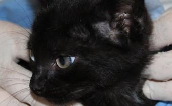 gatto assago 2