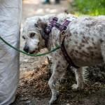 I consigli di ENPA Milano per proteggere i pets dal caldo