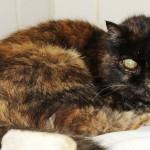 Gatto cieco e anziano salvo grazie a ENPA e Vigili del Fuoco