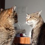 Introduzione di un nuovo gatto in casa