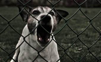 cane-che-abbaia-570x320