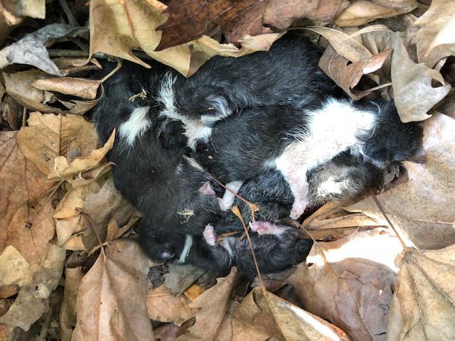 gattini sotto cespuglio