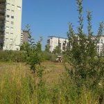 Lavori di potatura e rimozione del verde in periodi di nidificazione. ENPA Milano richiede e ottiene dal Comune sospensione di lavori in quartiere Adriano