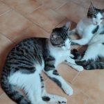 Yoshi e Marvin