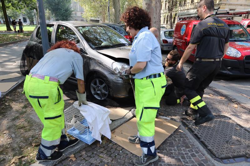 I pompieri insieme agli operatori dell'Enpa hanno liberato un gattino rimasto intrappolato per ore nel vano motore di una macchina in via Tabacchi