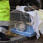 Gattino intrappolato nel motore di un'auto, recuperato dopo 16 ore da ENPA e Vigili del Fuoco