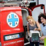 Mamma gatta partorisce nel vano motore di un furgone a Bresso, interviene ENPA Milano per il recupero dei cuccioli.