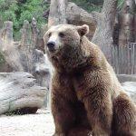 Probabile utilizzo di orso addestrato per realizzare spot Mercedes