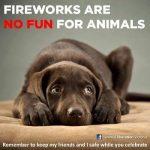 ENPA Milano chiede il divieto di vendita dei botti di Capodanno – Consigli su come proteggere gli animali