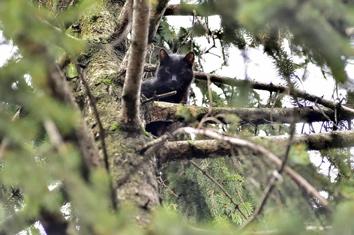 Gatto  sull' albero da due giorni in Via VAL Poschiavina
