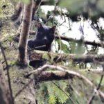 Gatto sull'albero da due giorni intervengono ENPA e Vigili del Fuoco