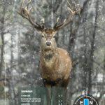 """Scarica """"Fauna"""", il periodico di ENPA Milano – Edizione Dicembre 2020"""