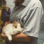 Coronavirus: Enpa, basta multe a chi cura animali in città