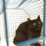 Gatto bloccato su una trave a 6 metri d'altezza salvo grazie a ENPA Milano e Vigili del Fuoco
