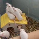 """""""Adottatopo"""": cerchiamo adozione per 50 topolini! Anche a distanza …"""