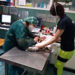 """""""La Clinica Veterinaria torna piano piano alla normalità"""""""