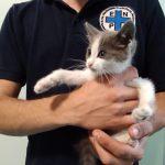Gattino in pericolo su cavalcavia dell'autostrada Milano Venezia