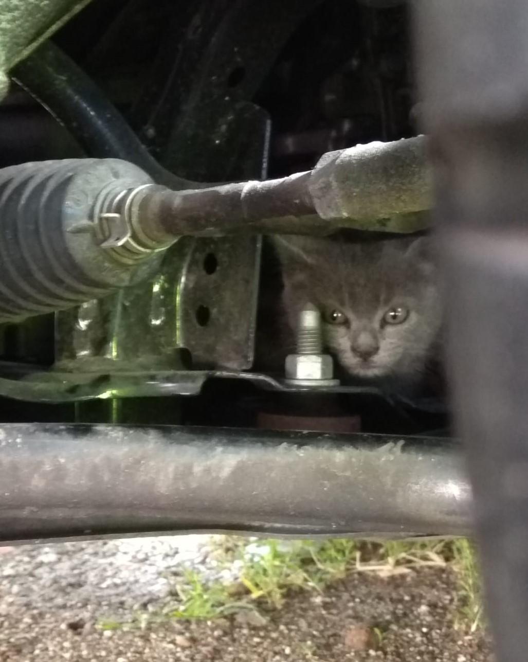 gattino 6