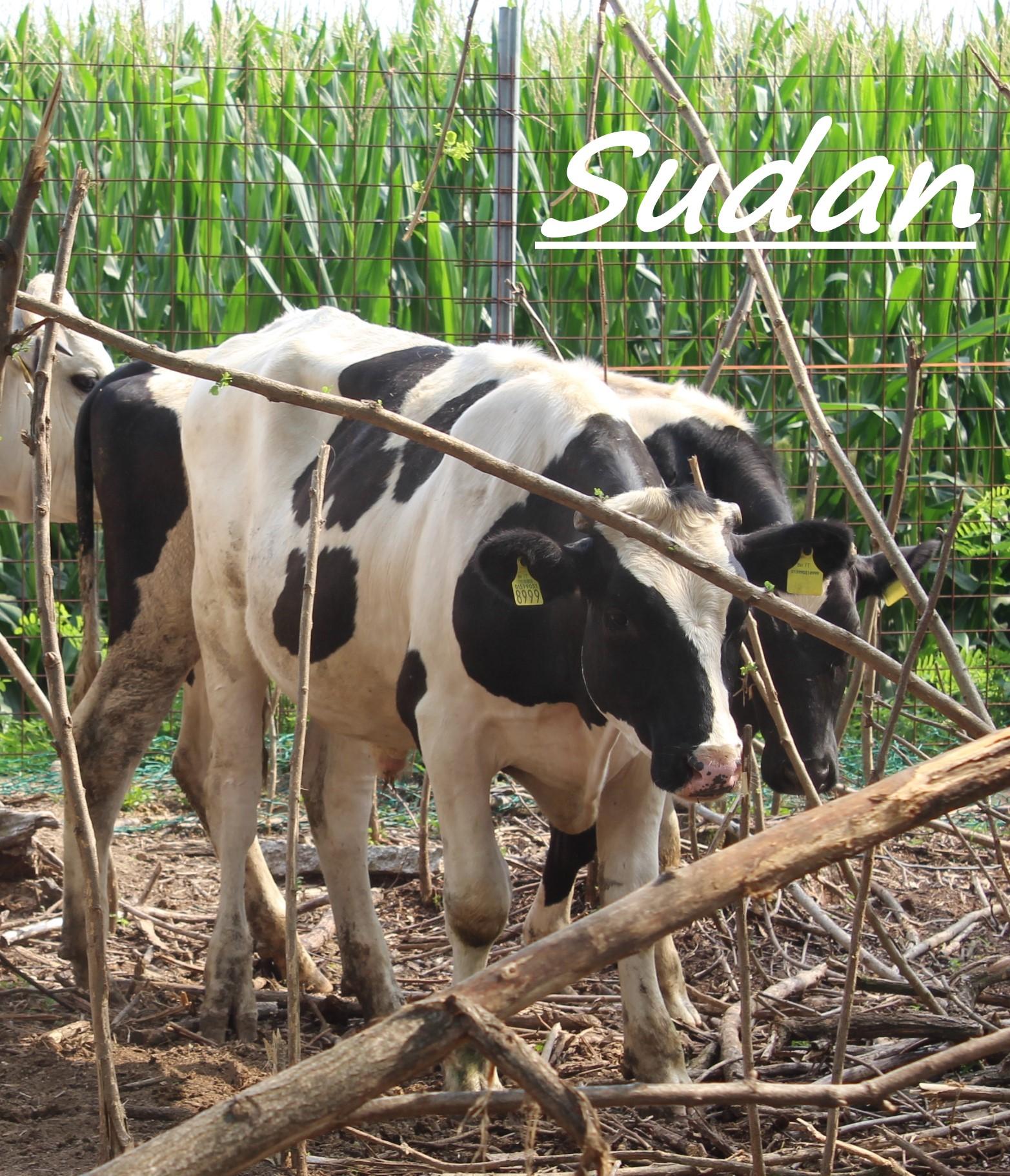 Sudan 6