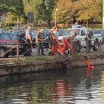Cinghiale caduto nel Naviglio ucciso con una fucilata: ENPA Milano chiede spiegazioni!