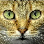 Condanna di ENPA per il rogo che ha distrutto i ripari dei gatti della colonia felina di via Rizzoli