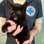 Gattino in difficoltà salvo grazie a ENPA e Polizia Locale di Milano